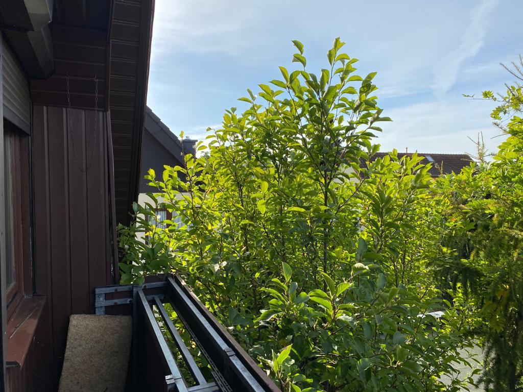 NEUER PREIS - OHNE PROVISION  |  Großstadtfeeling mit eigenem Gartenanteil