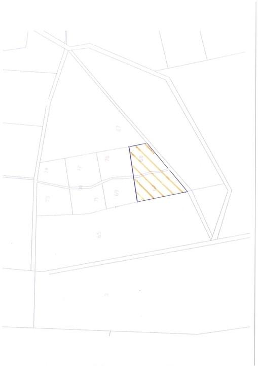WALD | Robinien & Kiefern • befahrbar • erntereif • 6-10% Rendite